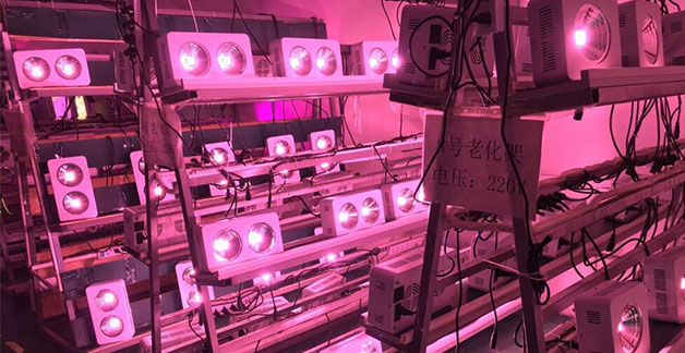 LED plant growing lights aging test